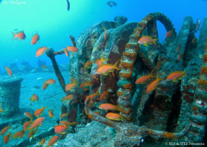 Anthias in the Thistlegorm. Canon G10, W20 Ikelite &amp; Inon... by Bea &amp; Stef Primatesta 